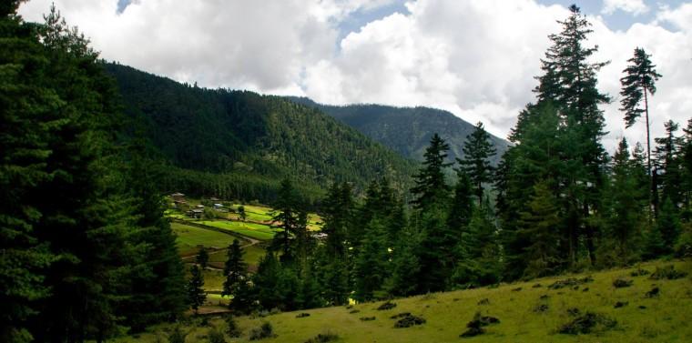 Ruta Gangtey hacia el Valle Phobjikha, en Bután