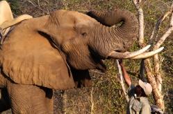 Elefante en el Parque Nacional Victoria Falls, Zimbabue