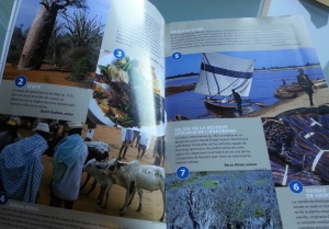 Empapándonos sobre Madagascar con la guía