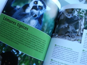 Lemures, ¡a por ellos vamos hasta Madagascar!