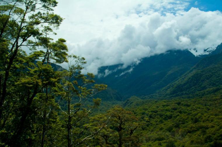 Camino a Miford Sound se atraviesan bosques y montes escarpados