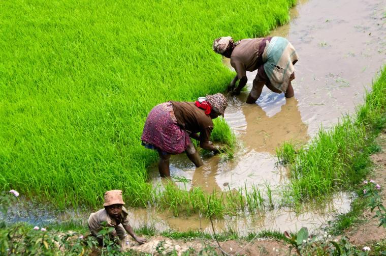 Los arrozales son una tónica constante en los paisajes de Madagascar
