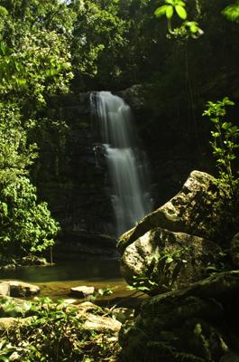 Parada a comer en un claro paradisiaco del Parque de Ranomafana