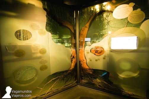 Un olivo en la sala de exposiciones en el museo del aceite Terra Oleum, Jaén