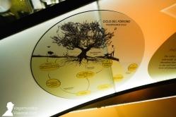 Paneles explicativos sobre el ciclo de vida del olivo en el museo Terra Oleum